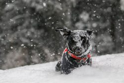 photo of a dog in the snow