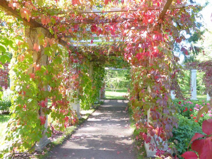 The ornamental gardens