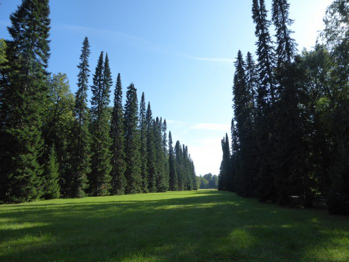 The meadow where the 530m toboggan slide used to be
