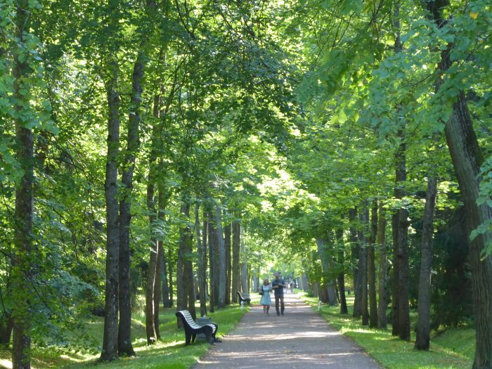 One of the tree-lined avenues